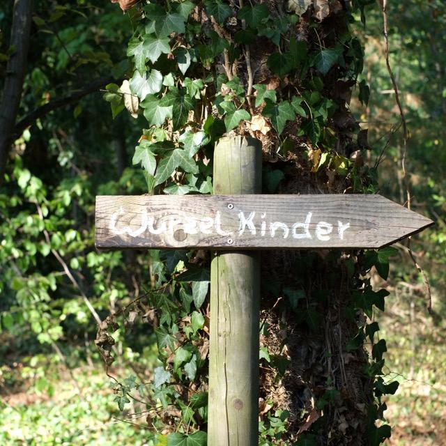 herbst-im-wald-natur-umwelt-herrundfraukrauss-vier